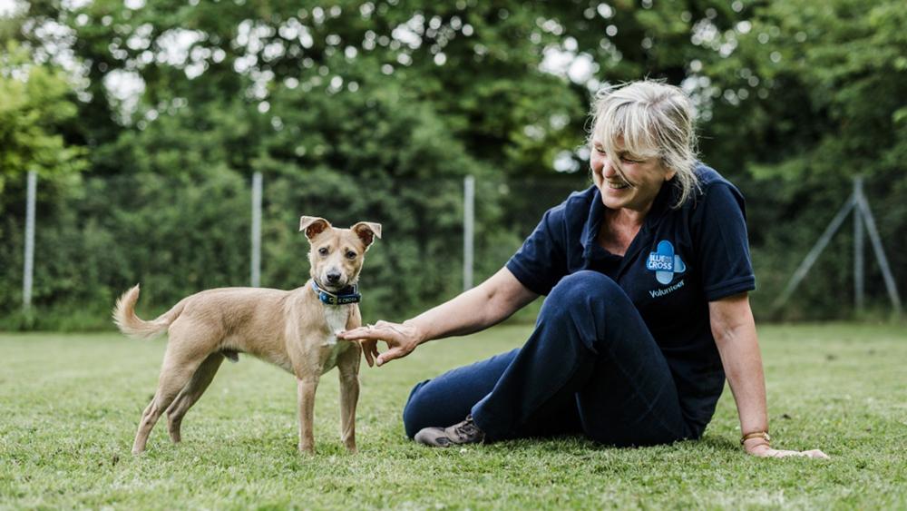 Blue Cross Animal Charity (photo: Blue Cross)