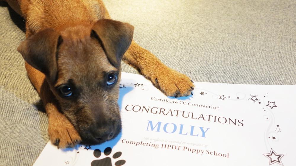 Molly's graduation