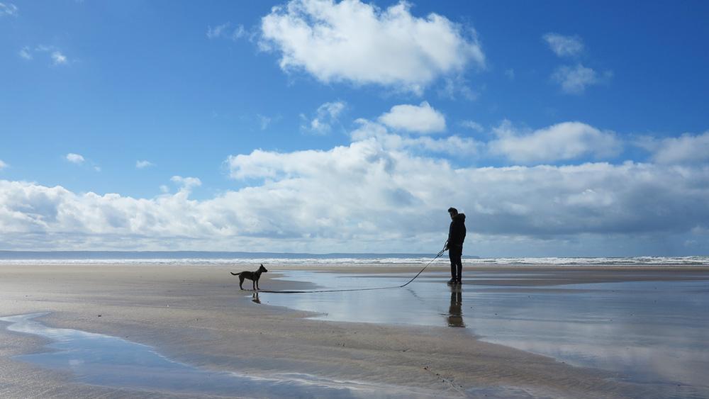 Dog-friendly Devon