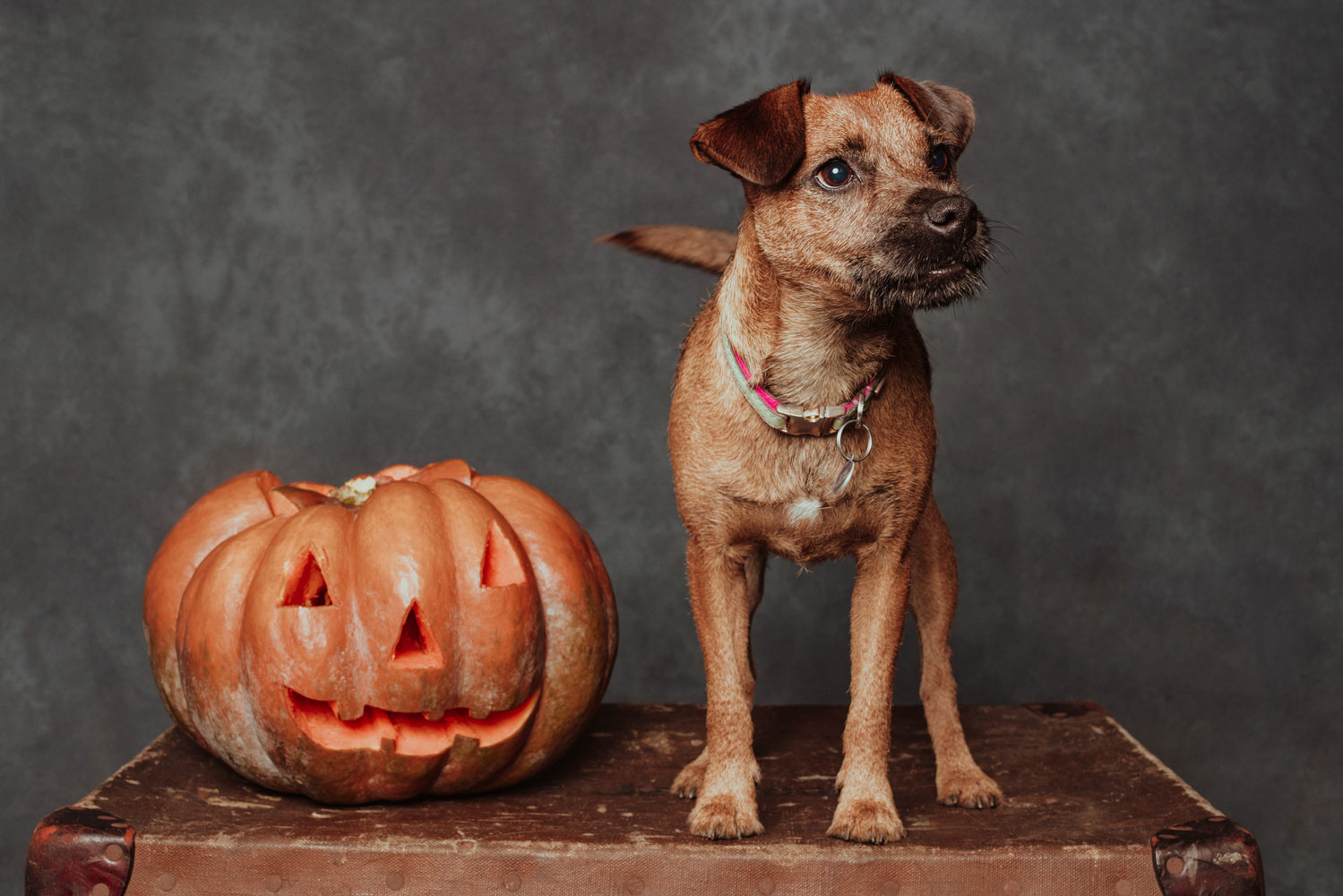 Molly with pumpkin