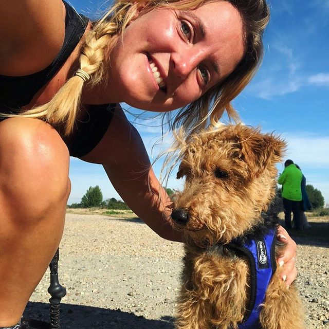 "#repost @hemmythewelshie: ""5km run with 👱🏼♀️to start this lovely sunny Sunday ☀️ Thanks @runthepackldn for another great event🏃🏼♀️! . . . . . #canicross #run #runnersofinstagram #dogslife #dogsofinstagram #welshie #welshterrier #sundayfunday #sundayrunday"