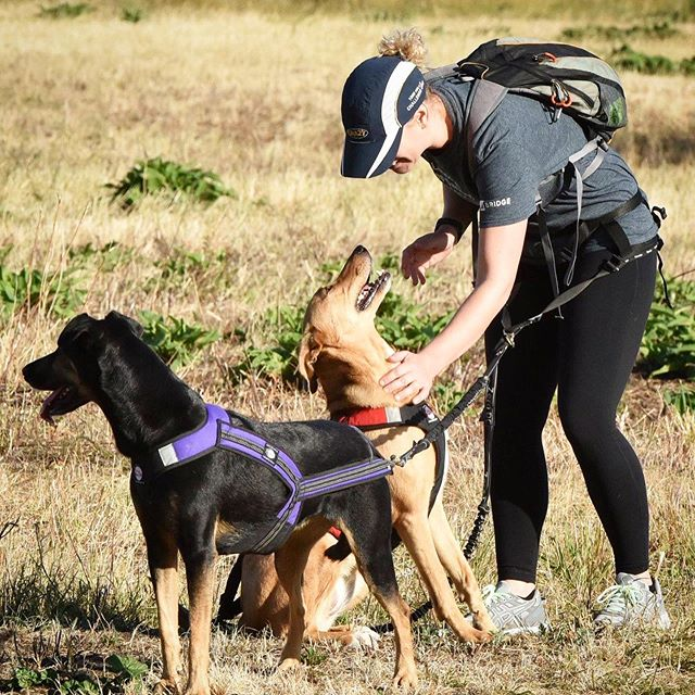 Dogs (and their humans) getting ready to rock and roll at our run this morning. All breeds welcome! . . . . . #canicross #canicrossdogs #dogevent #charityevent #walthamstowmarshes #northlondondogs #doggos #londondogs #socialrunning #sundayfunday #sundayrun #runthepackldn 📸 @mikeeldredphotography