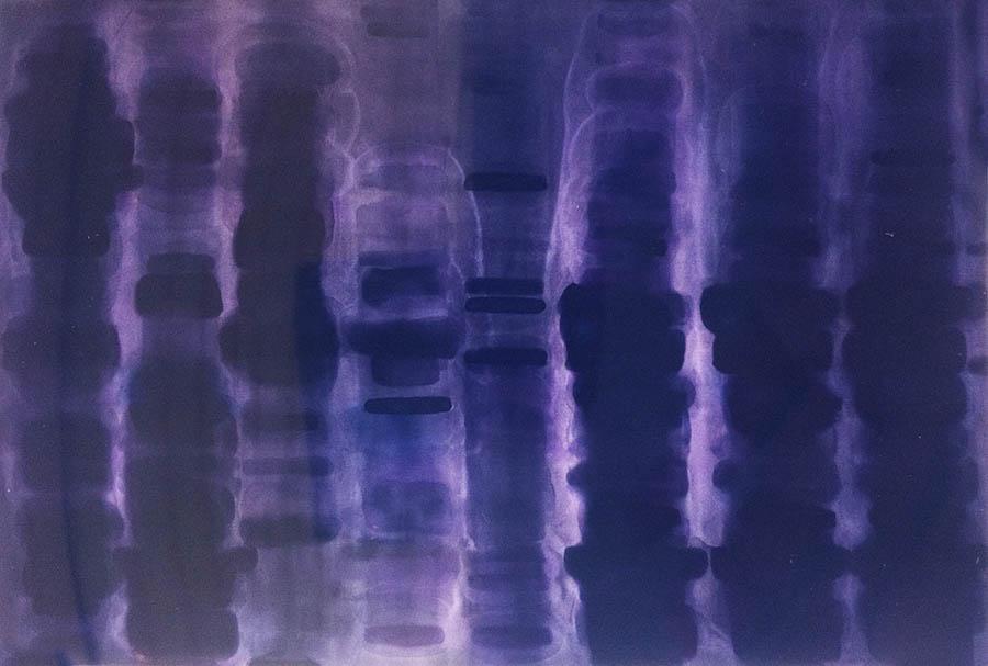 """Monoclonal Lucifer Dye, 73"""" x 108"""", 1988"""