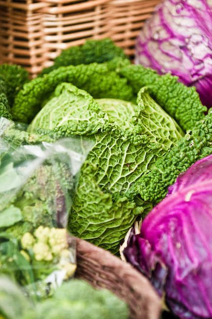 focused_203464080-View-fresh-cabbage-farmers-market.jpg