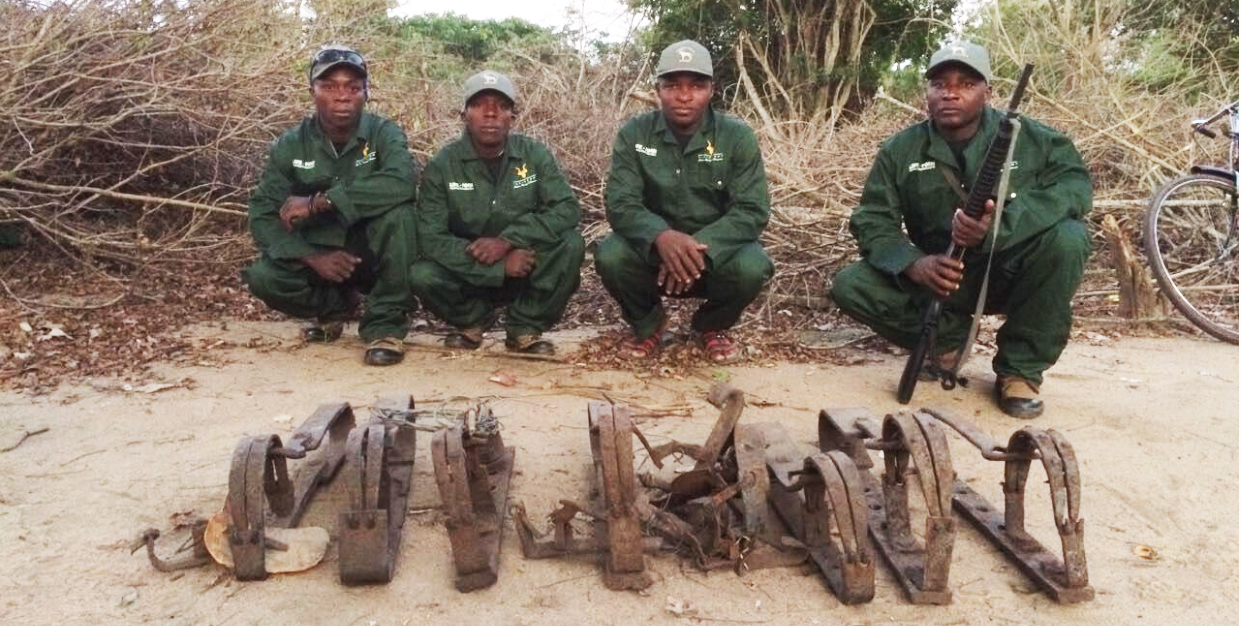 The Zambeze Delta anti poaching team. Many years ago we were proud of the 4 men and their achievements - pictured here with some gin traps they have removed.