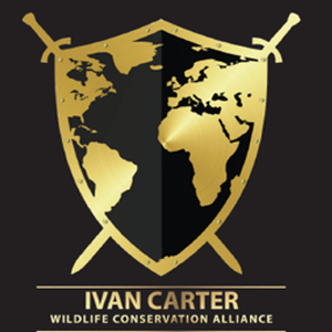 Ivan Carter has worked for the last 28 years as one of Africa's premier Safari guides in 11 different countries. Compelled by what he has witness first-hand, the Ivan Carter Wildlife Conservation Alliance was born.