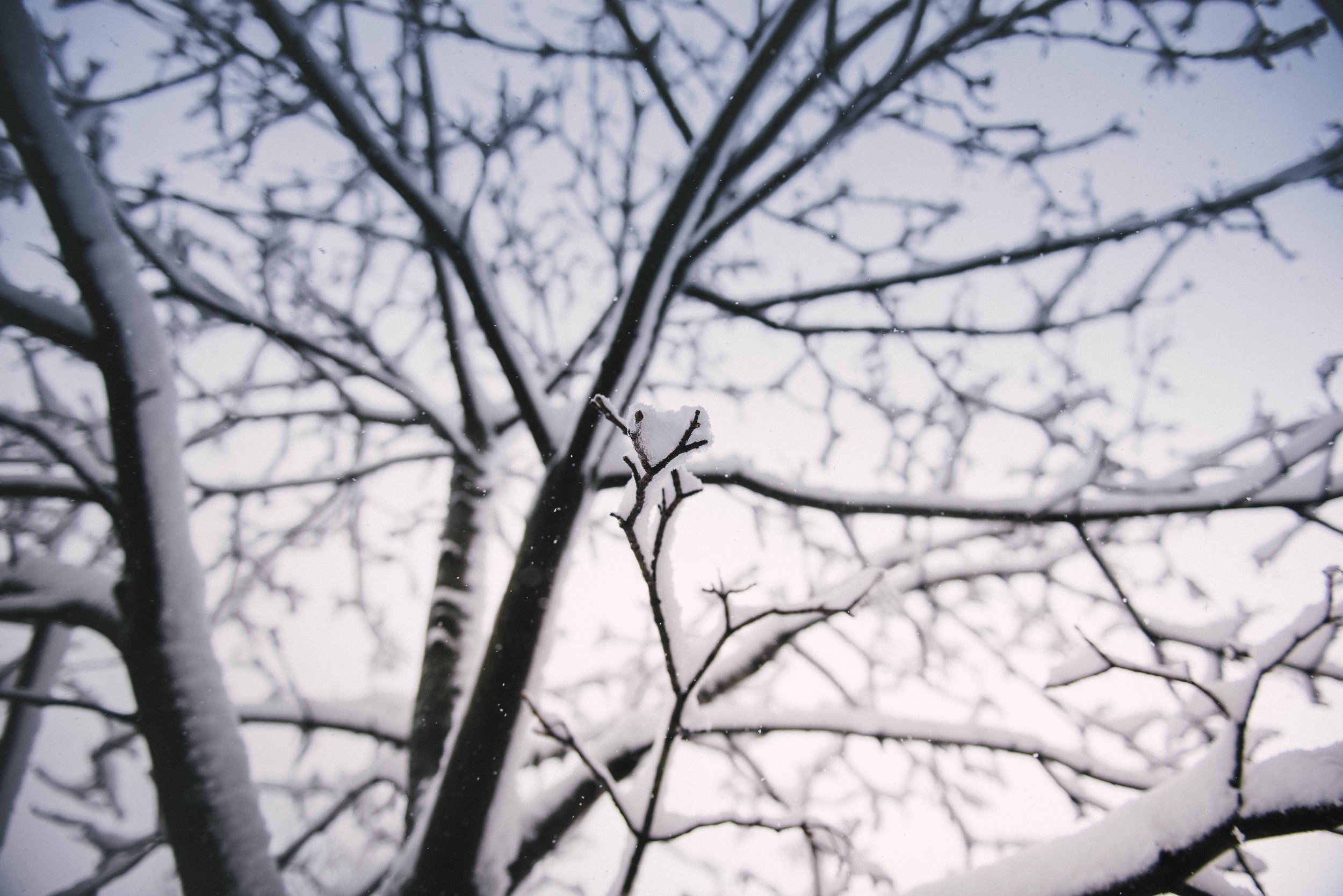 Trim branches before strong winds or ice do damage to surrounding structures.