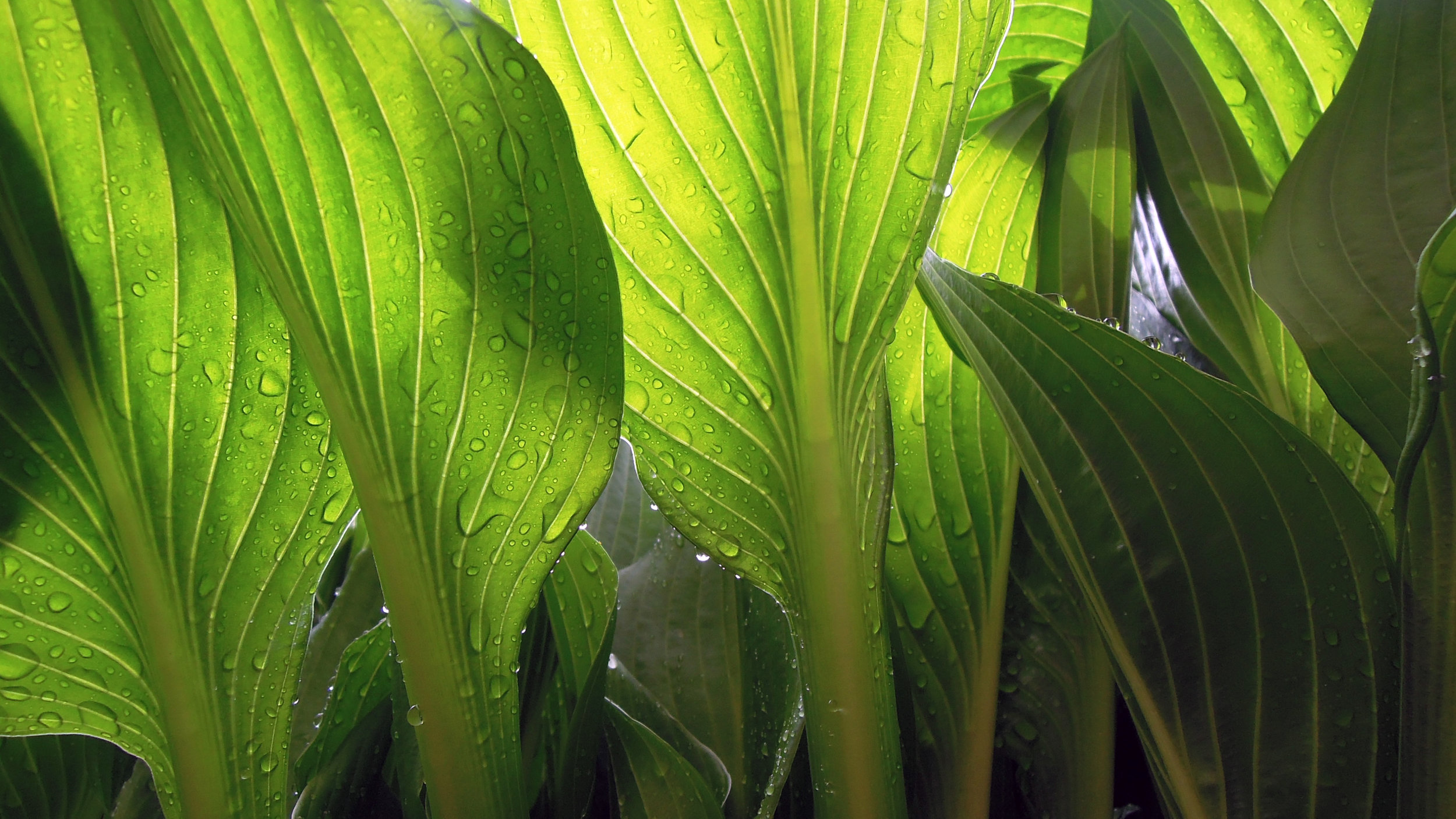Canva - Close up of green leaves with water droplets.jpg