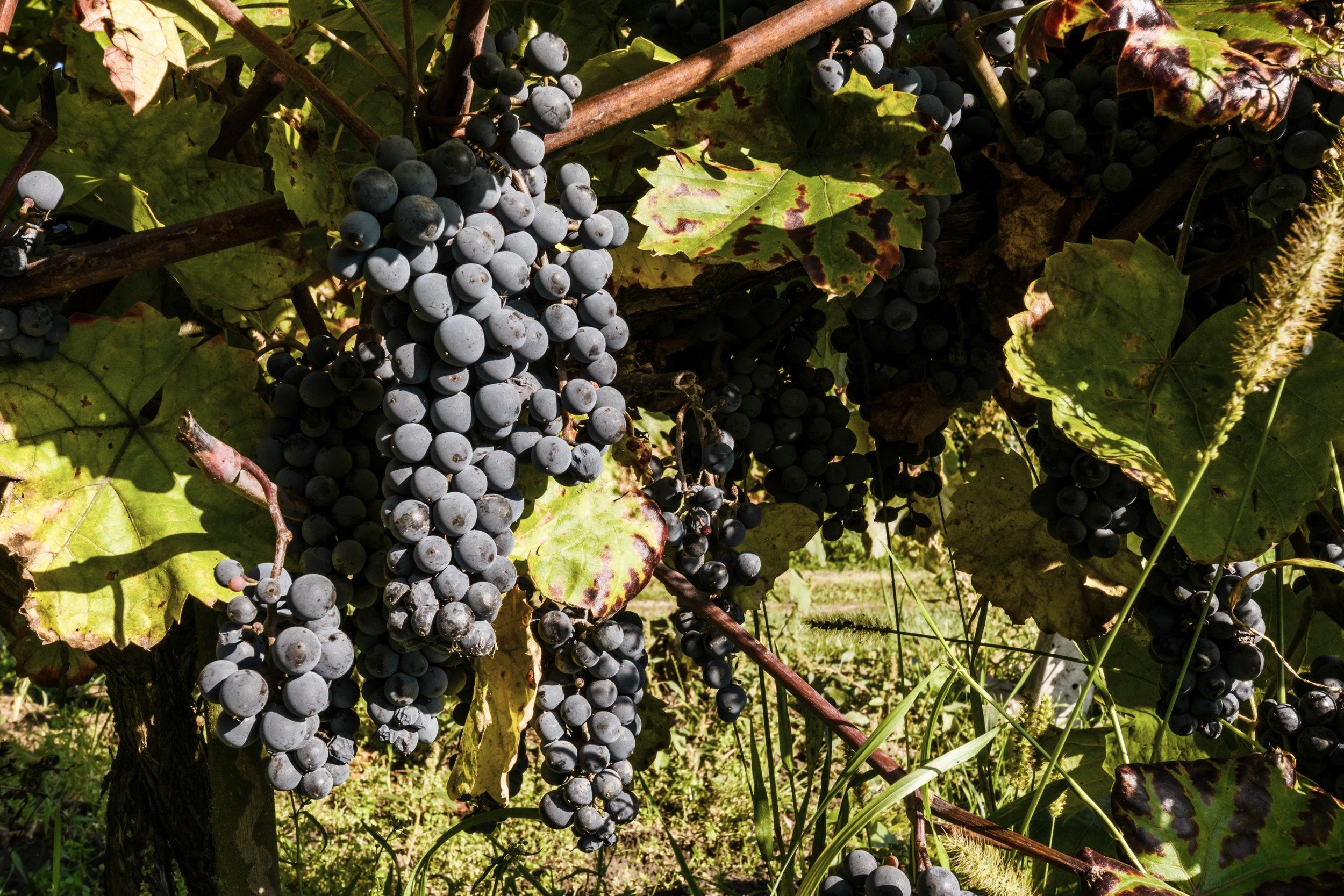 natura_wino_2.jpg