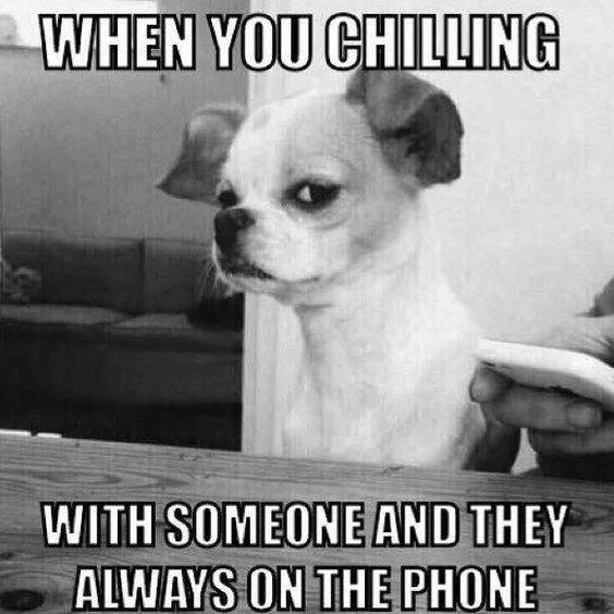 """A photo of a small dog sneering at the camera with the words around it, """"When you chilling with someone and they always on the phone."""""""
