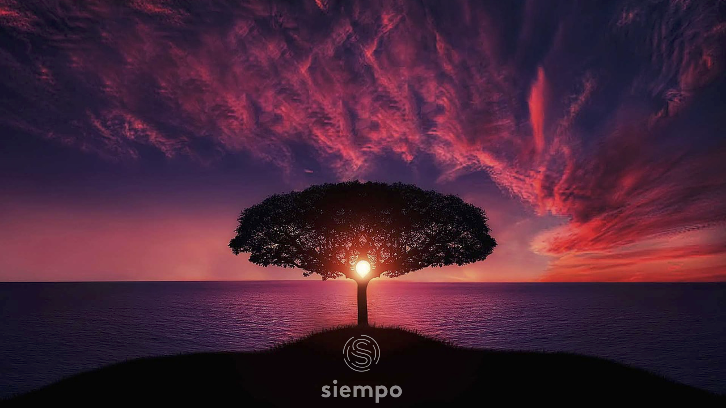 """An image of a lone tree with a sunset behind it and a large body of water reflecting the sunset. """"Siempo"""" is written along the bottom."""