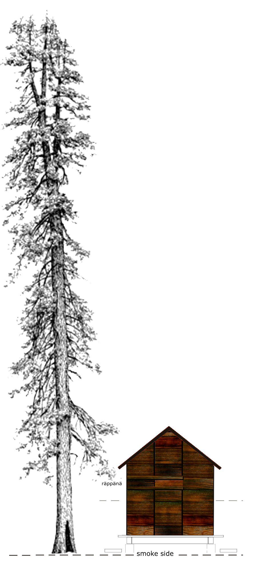 SAUNA_SIDE_ELEV_TREE.png