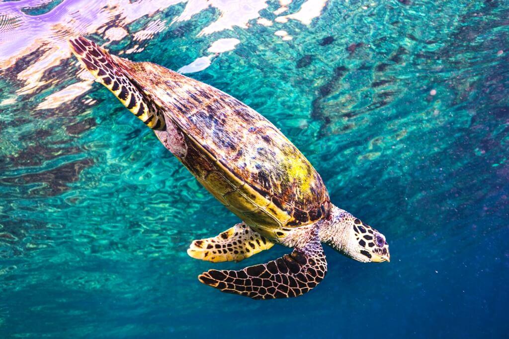Sea Turtle Island Exhibit at The Oklahoma Aquarium - Explore Tulsa Near The Campbell Hotel.jpg