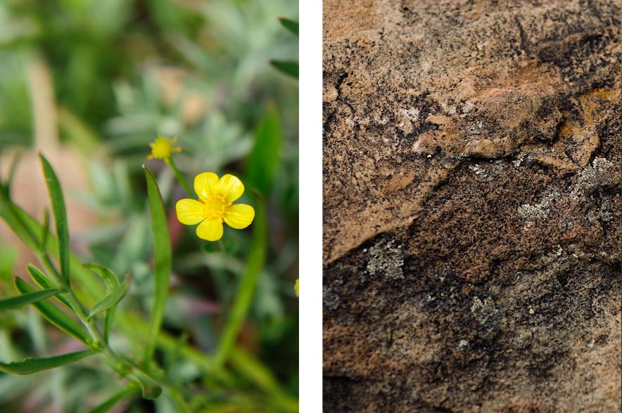 rock-flower.jpg