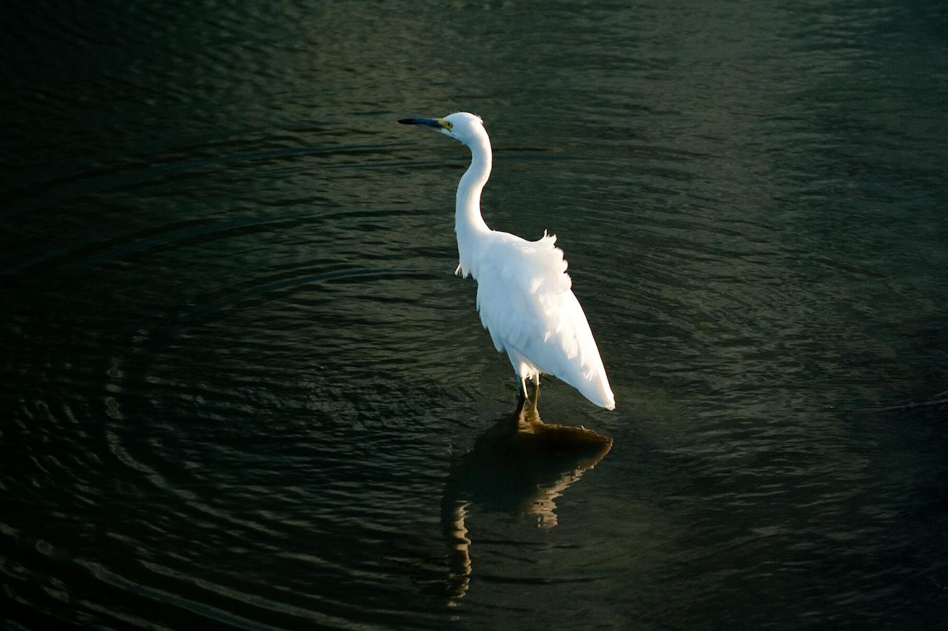 Just outside Elsie Roemer Bird Sanctuary, Alameda