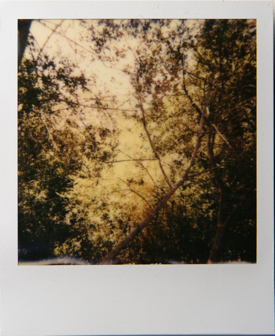 DSC1995.jpg