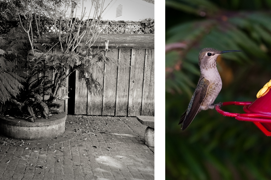 Hummingbird and feeders in the courtyard