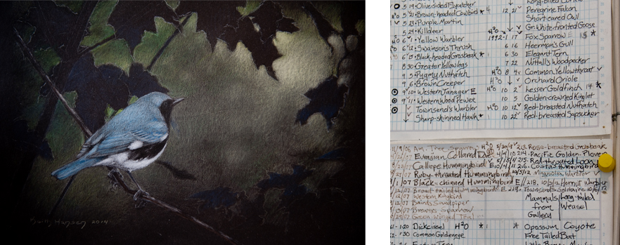 A commissioned drawing that also depicts a dramatic background (left) and the posted list documenting the variety of bird species seen from the studio window (right)