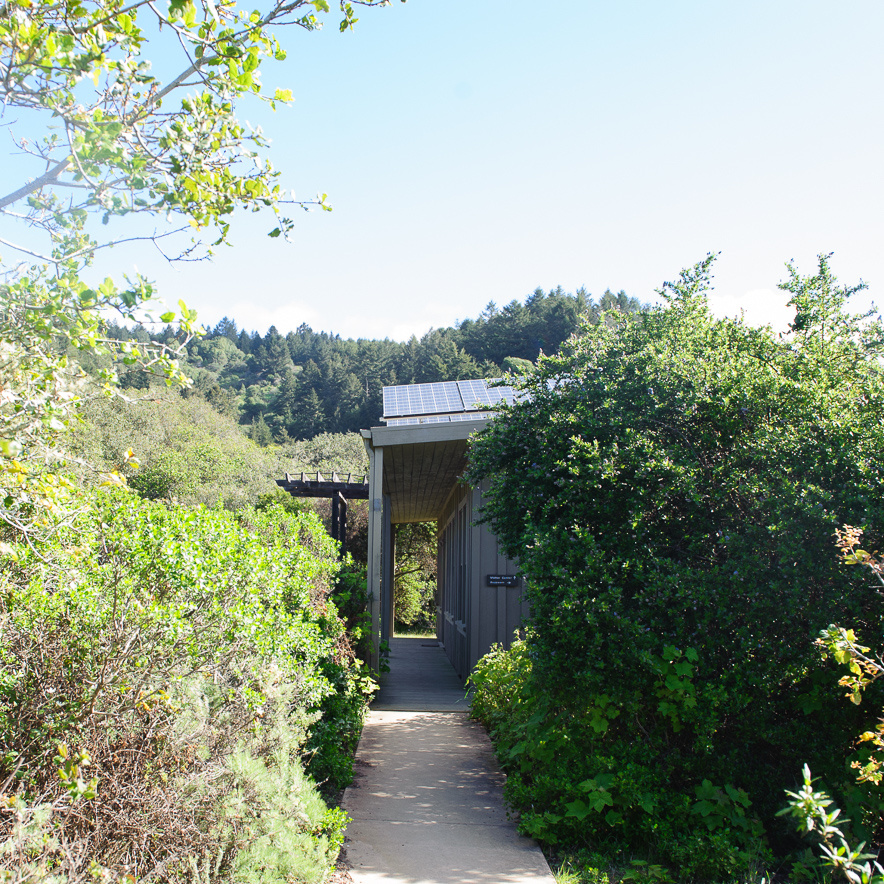 The walkway surrounded by California Wild Lilac and Coast Live Oaks leads to the field station and visitor center