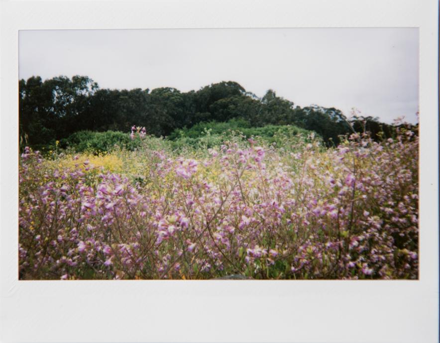More fun with instant film, Fuji Instax