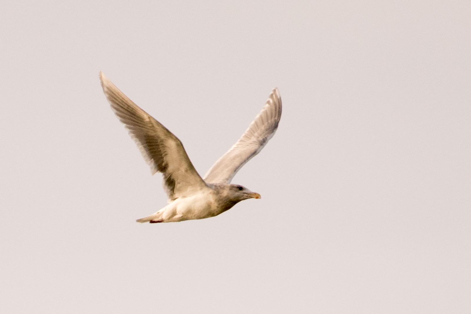bird-12.jpg