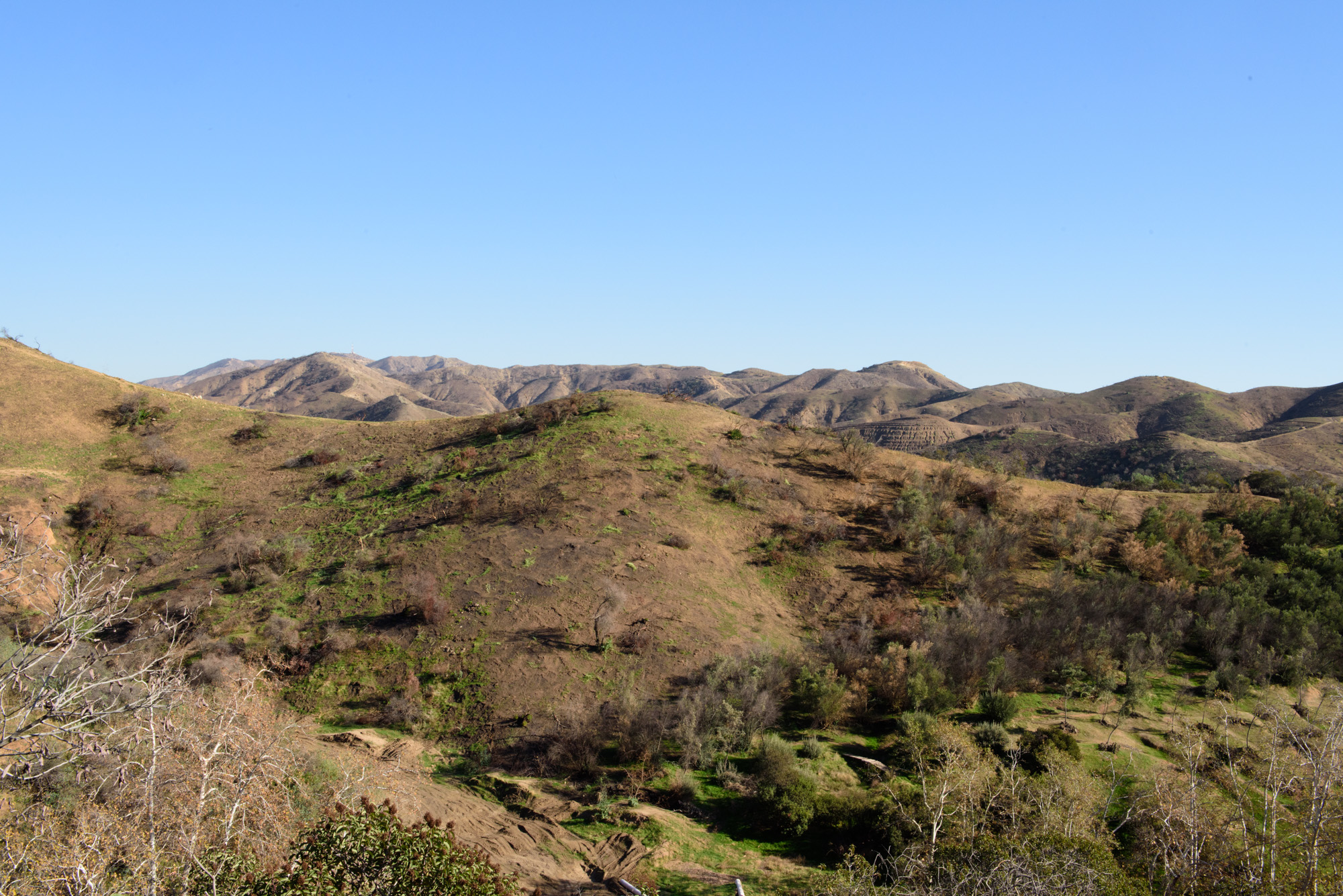 View of Verdugo Mountains from Wildflower Hill at the Theodore Payne Foundation. The mountains are covered with a mix of chaparral and coastal sage scrub.