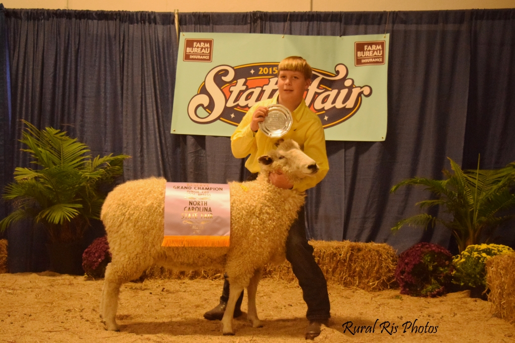 Reserve Champion Jr. Wool Breed Ewe - 2015 NC State Fair