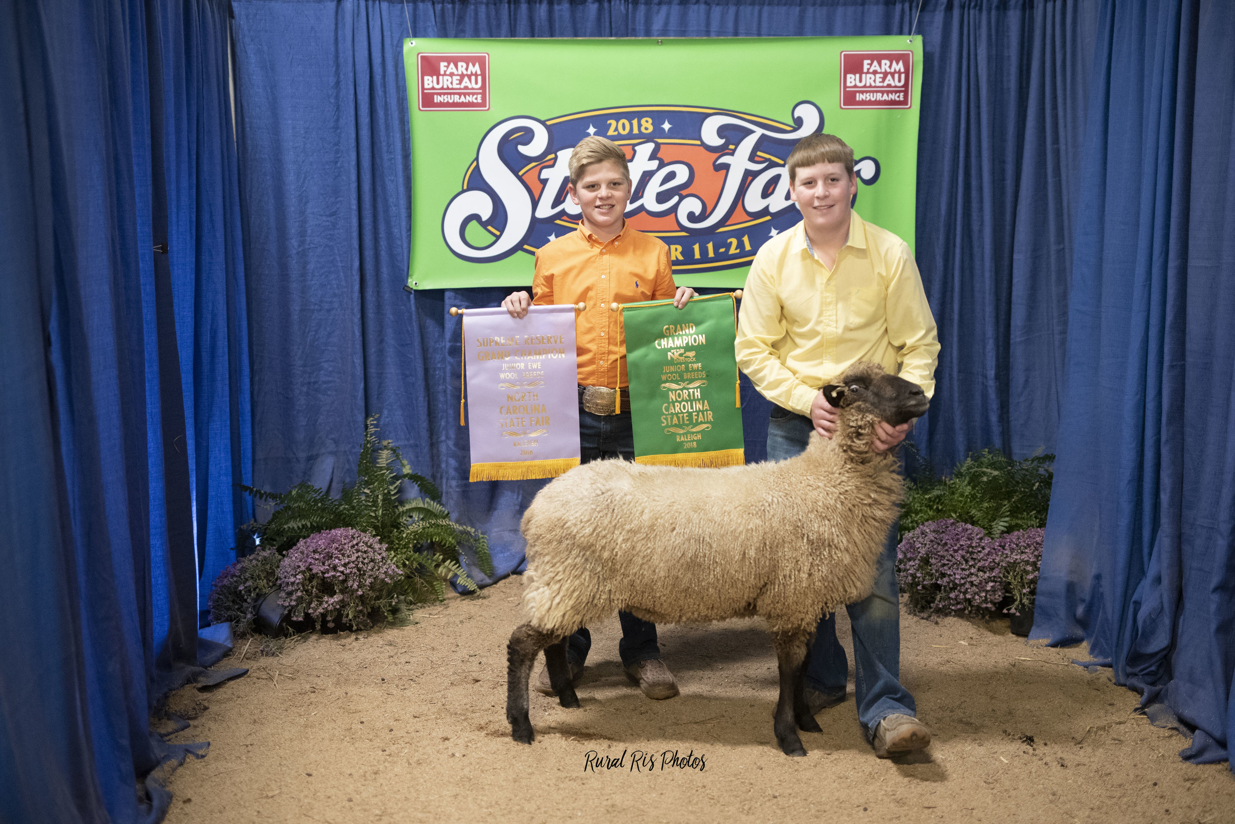 Reserve Champion Jr. Wool Breed Ewe   - 2018 NC State Fair