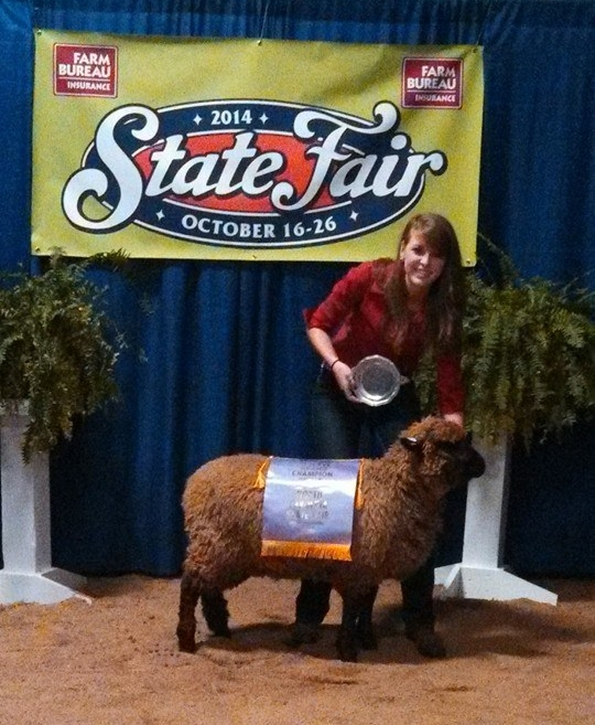 Reserve Champion Jr. Wool Breed Ewe - 2014 NC State Fair