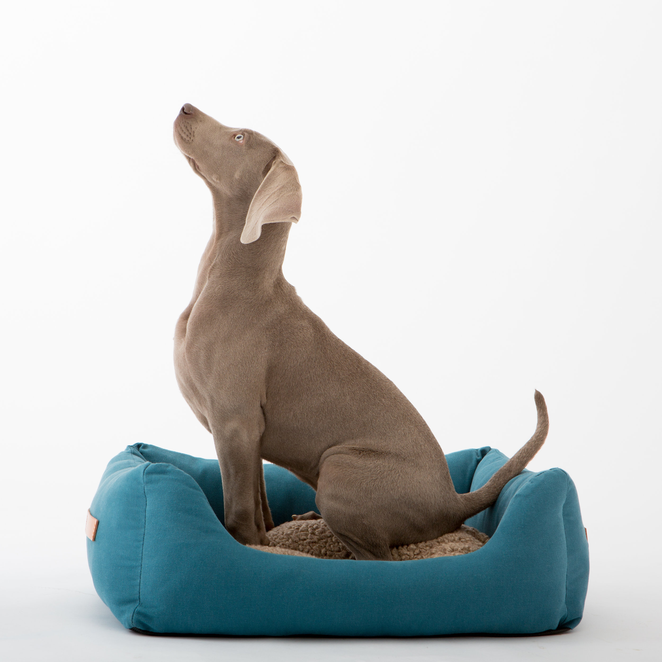 Comfort for dogs