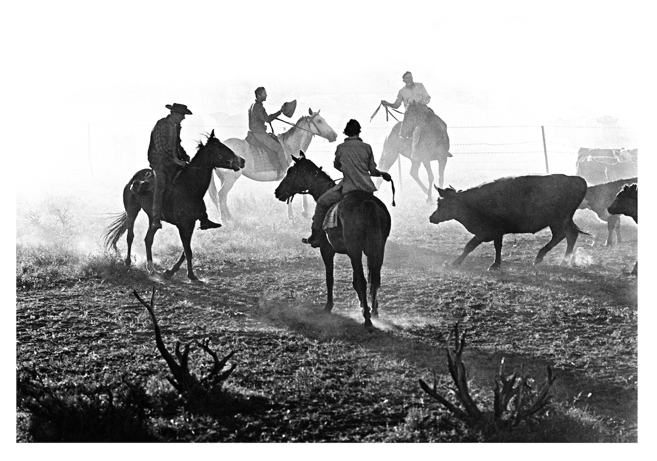 Cattle Muster, Mardathuna Station, Carnarvon WA, 1968