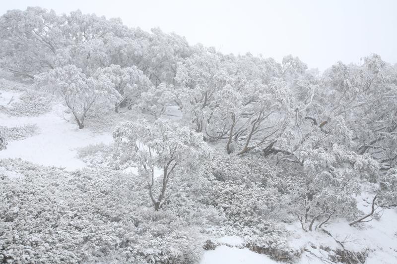 Snowy Mountains, Victoria.
