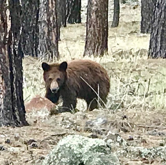 Saw this in my driveway.  He's just a baby.  Wonder where the mommy is? 🐻😬 #behindme