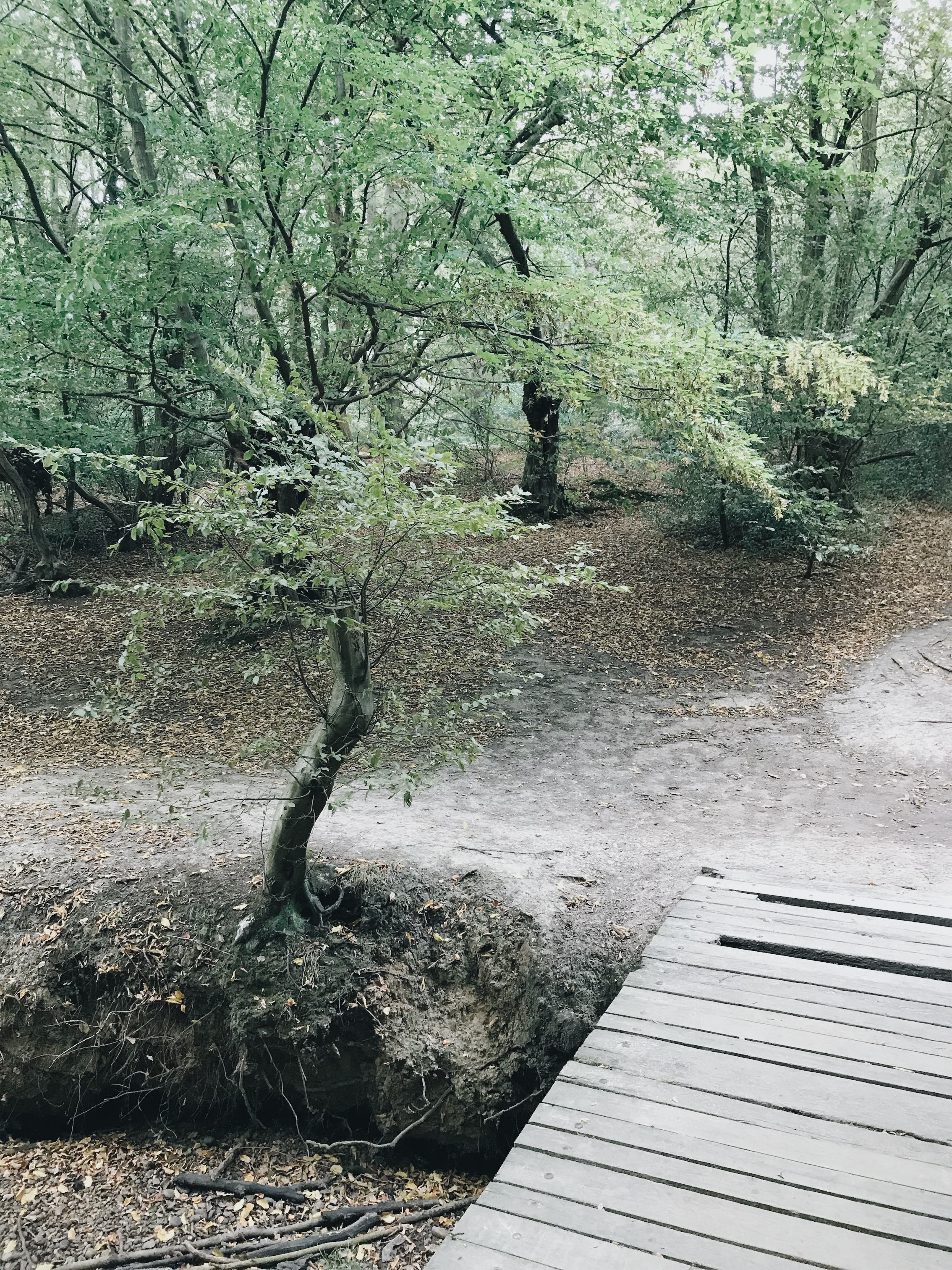 JPEG image-62D53E4C7A1D-19.jpeg
