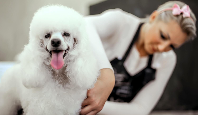 lady grooming.jpg