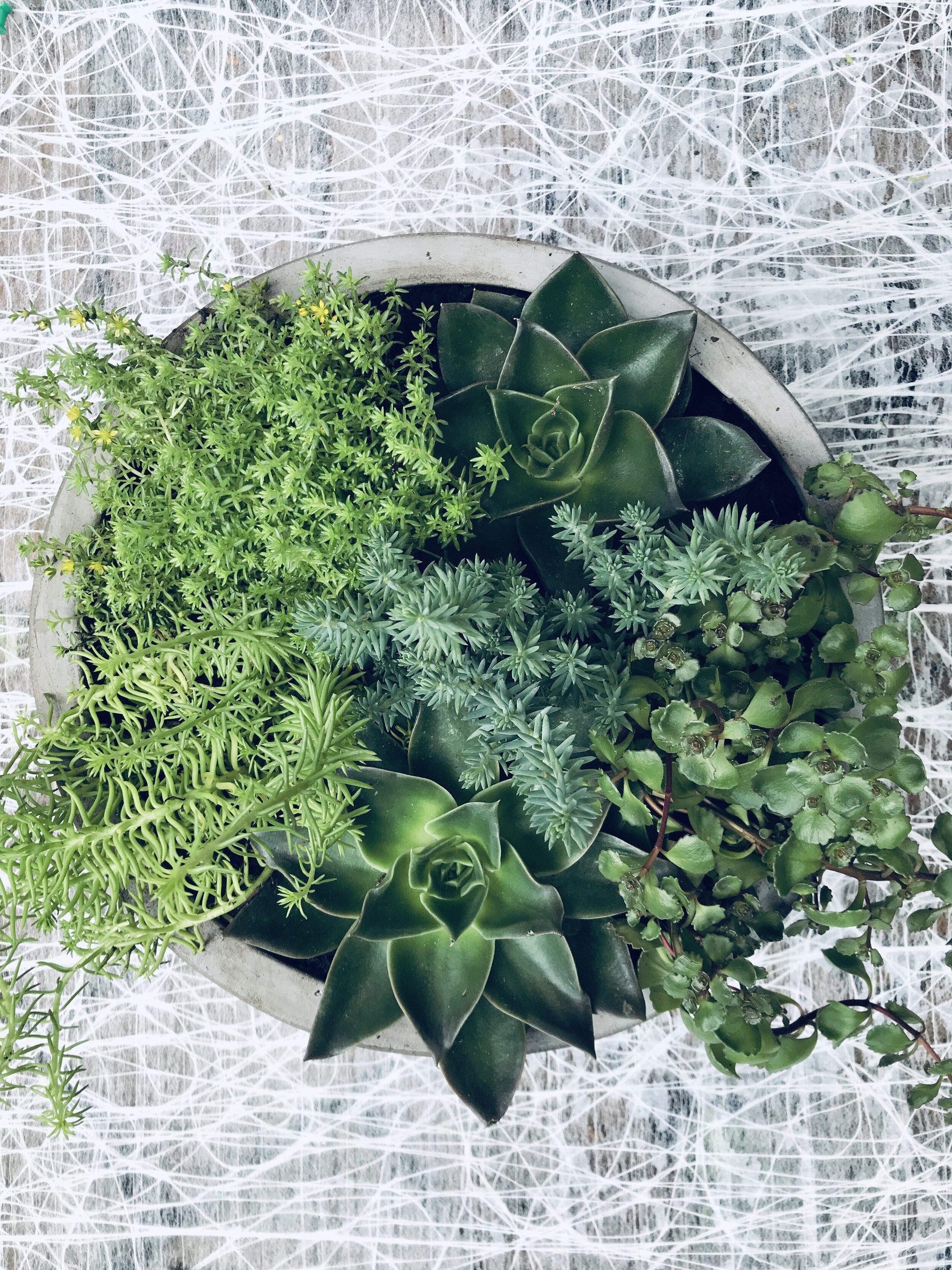 Live Plants Indoor Bowen Island