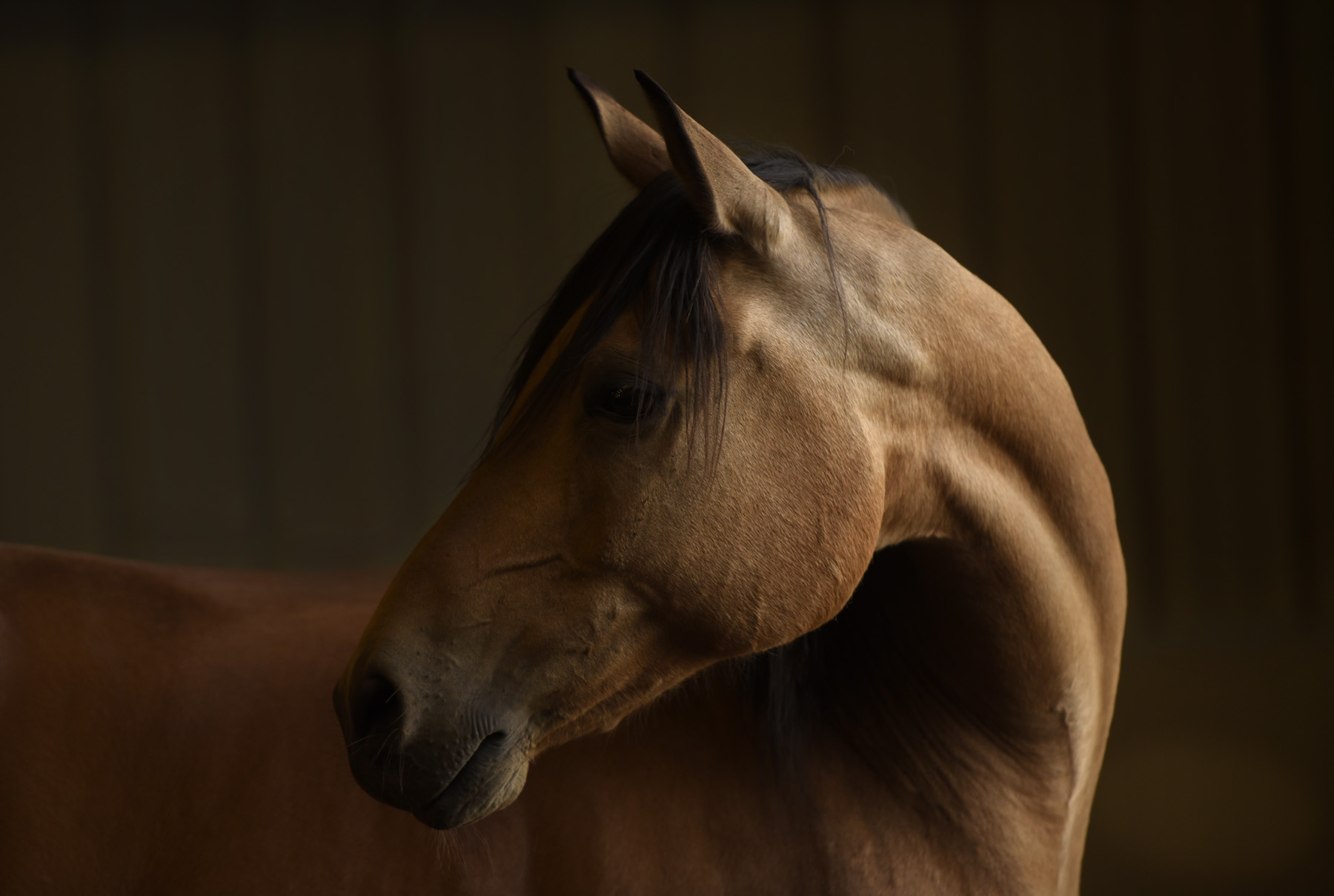 - 1. Show barn12 x 12 stall+ 12 x 72' private run$580/month2. Paddock Board - Private12 x 12 loafing shed+24 x 72' private run$505/month3. Paddock Board - Semi-private12 x 12 loafing shed+ 24 x 72' runShared with 1-2 compatible horses$475/month4. Guest barn12 x 12 stall+ overnight turnout.$475/month5. Overnighter12 x 12' stallor paddock option$25/nightPhoto featuring: Tupelo,a buckskin,Andalusian-Arabian dream horse, who lives at Trinity.Photo Credit: Tony Stromberg