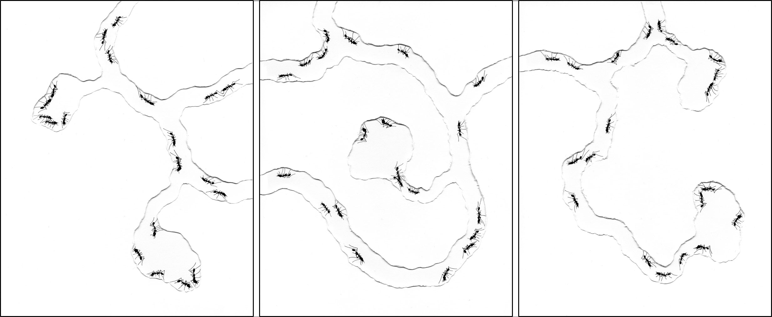 ant_draw_bottom.jpg