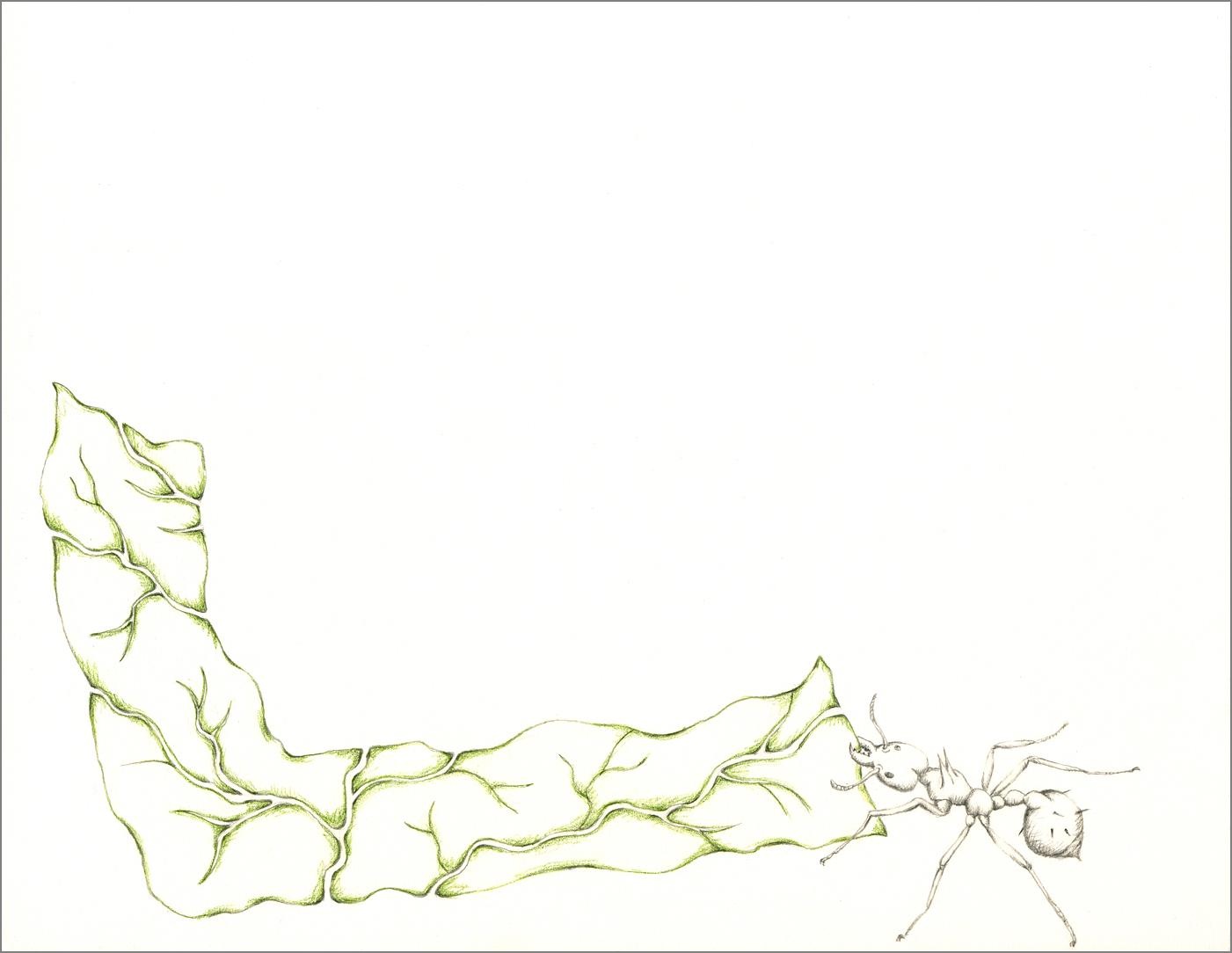 ant_draw_l_4g.jpg