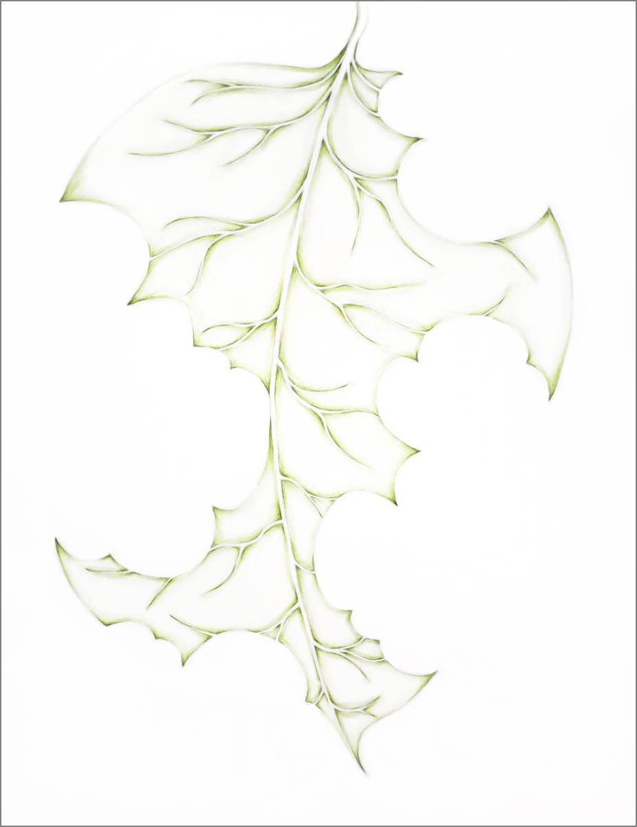 ant_draw_leaf2_4g.jpg