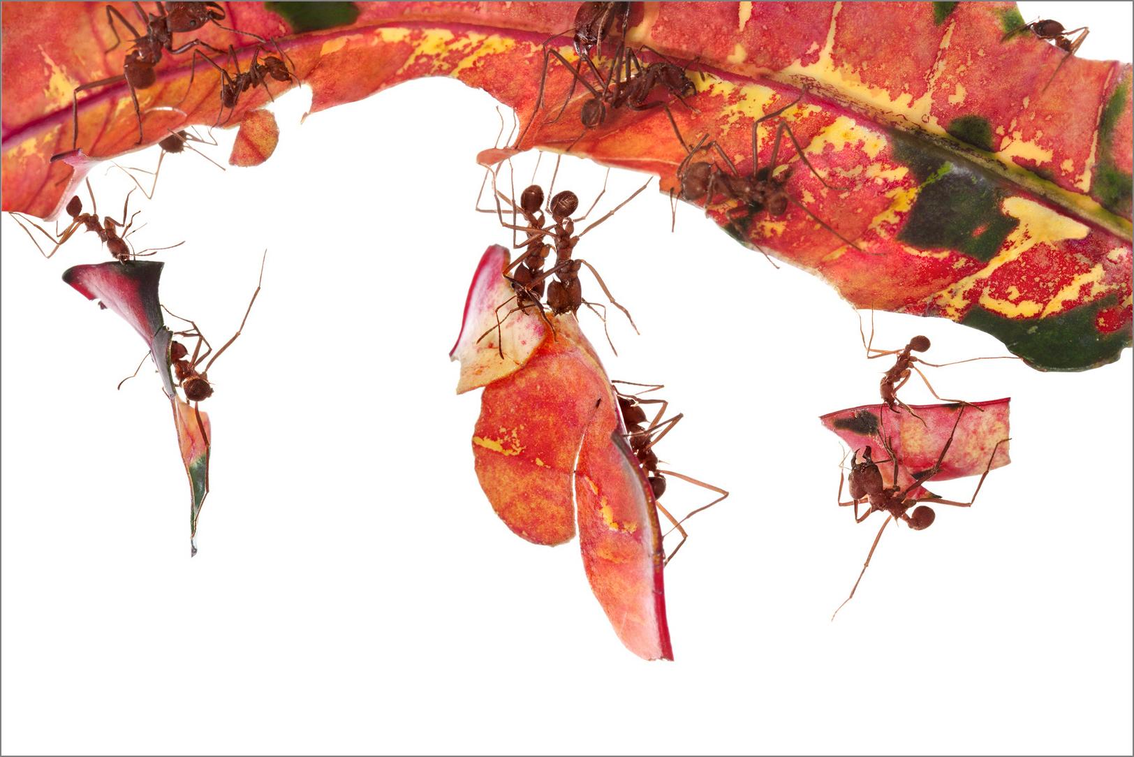 antworks_orange_4g.jpg