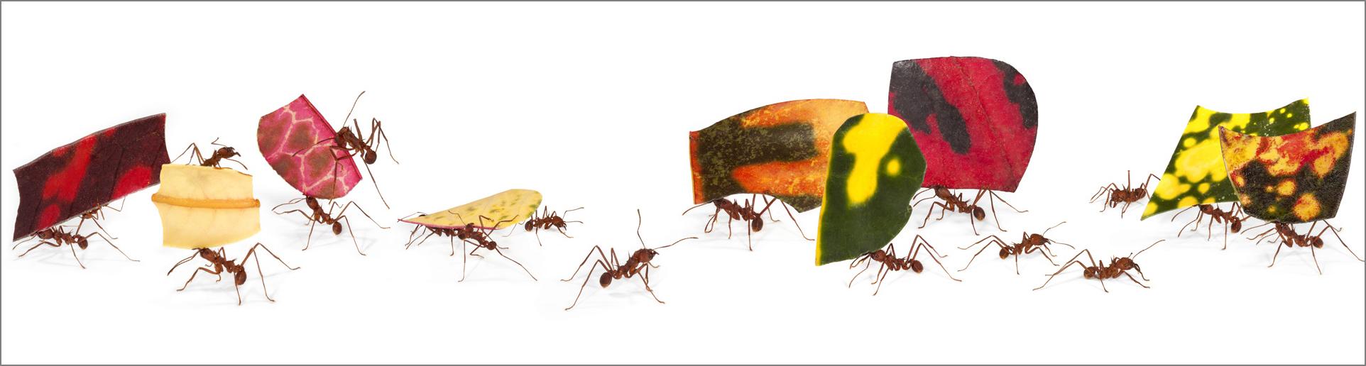 antworks_parade_4g.jpg