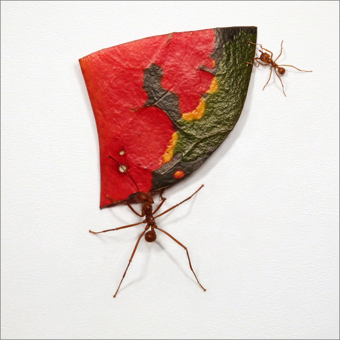 ant_art5_4g.jpg