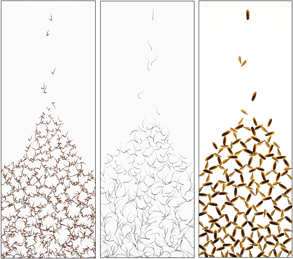 """PIT DRAWINGS, Cockroach legs, antennae, wings on paper, 30""""x11"""" each panel"""