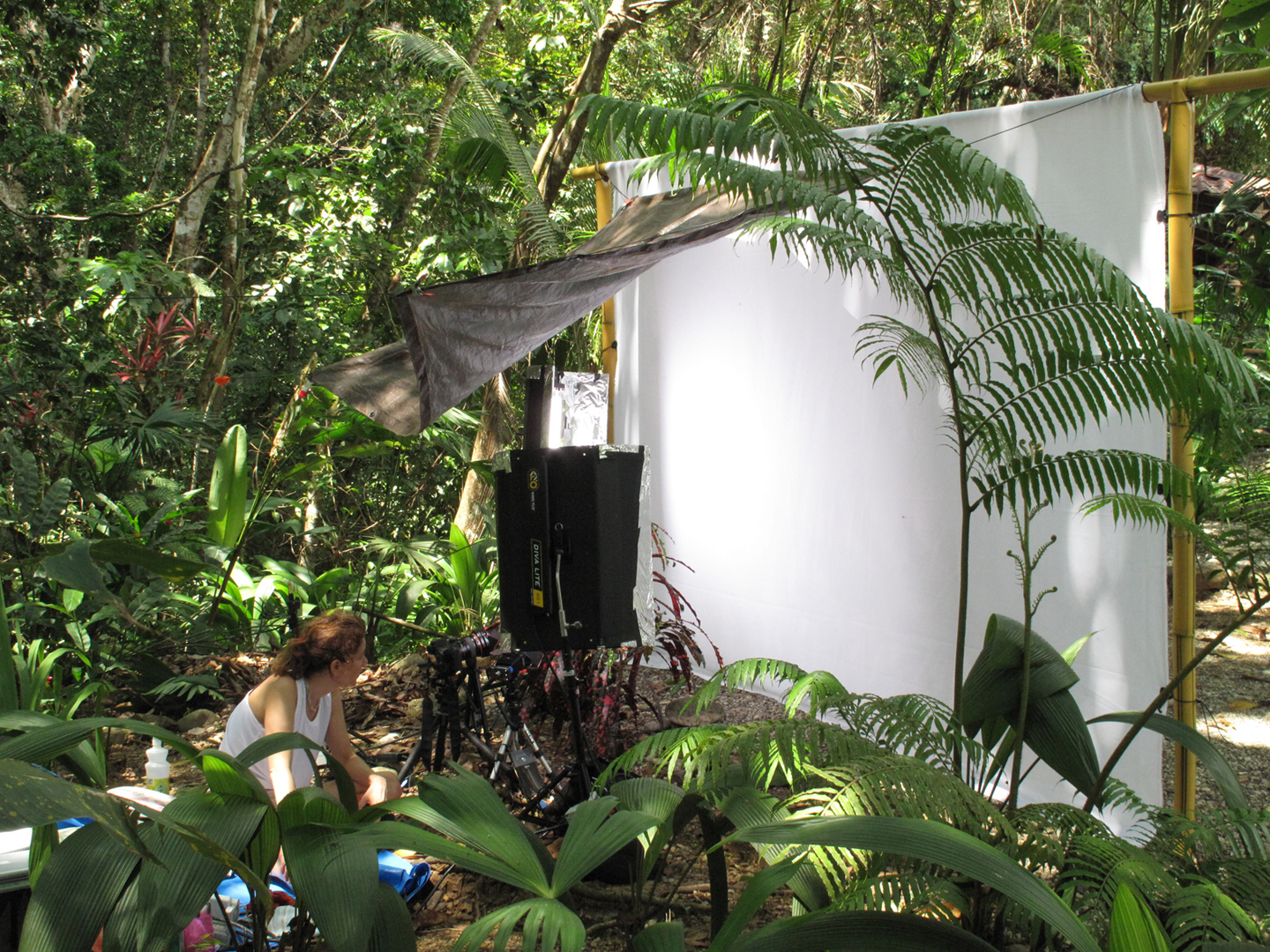 Photographing ANTWORKS IN PROGRESS, Costa Rica