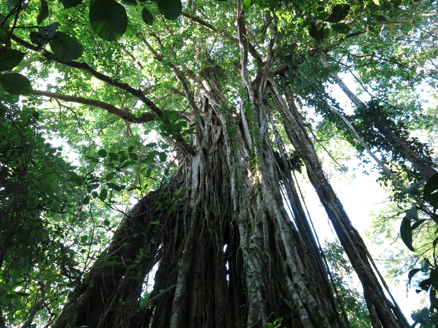 Forest canopy, Costa Rica