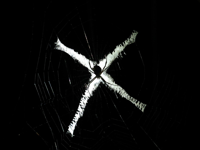 Spiderweb, Costa Rica