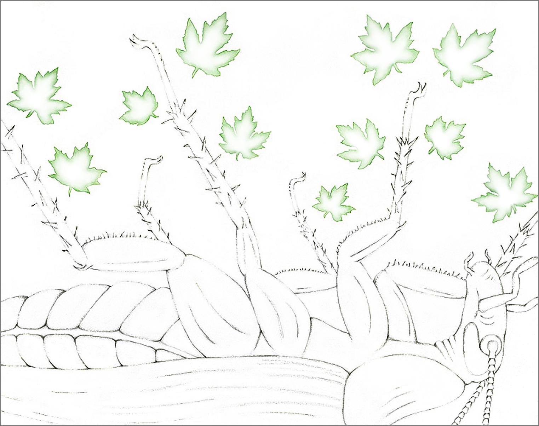 """FLORA & FAUNA, Pencil & watercolor op paper, 23""""x29"""""""