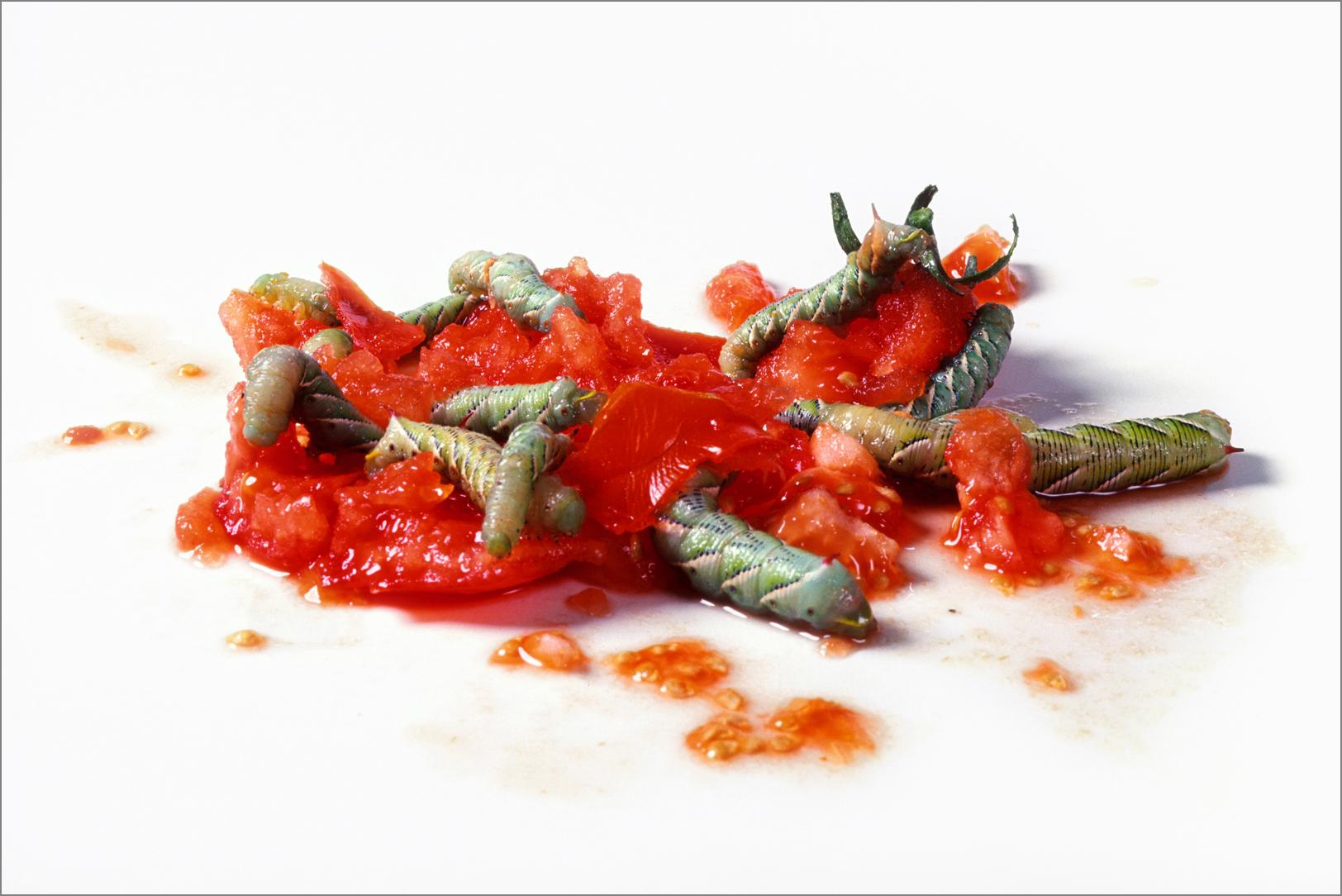 fc_tomato8_4g.jpg