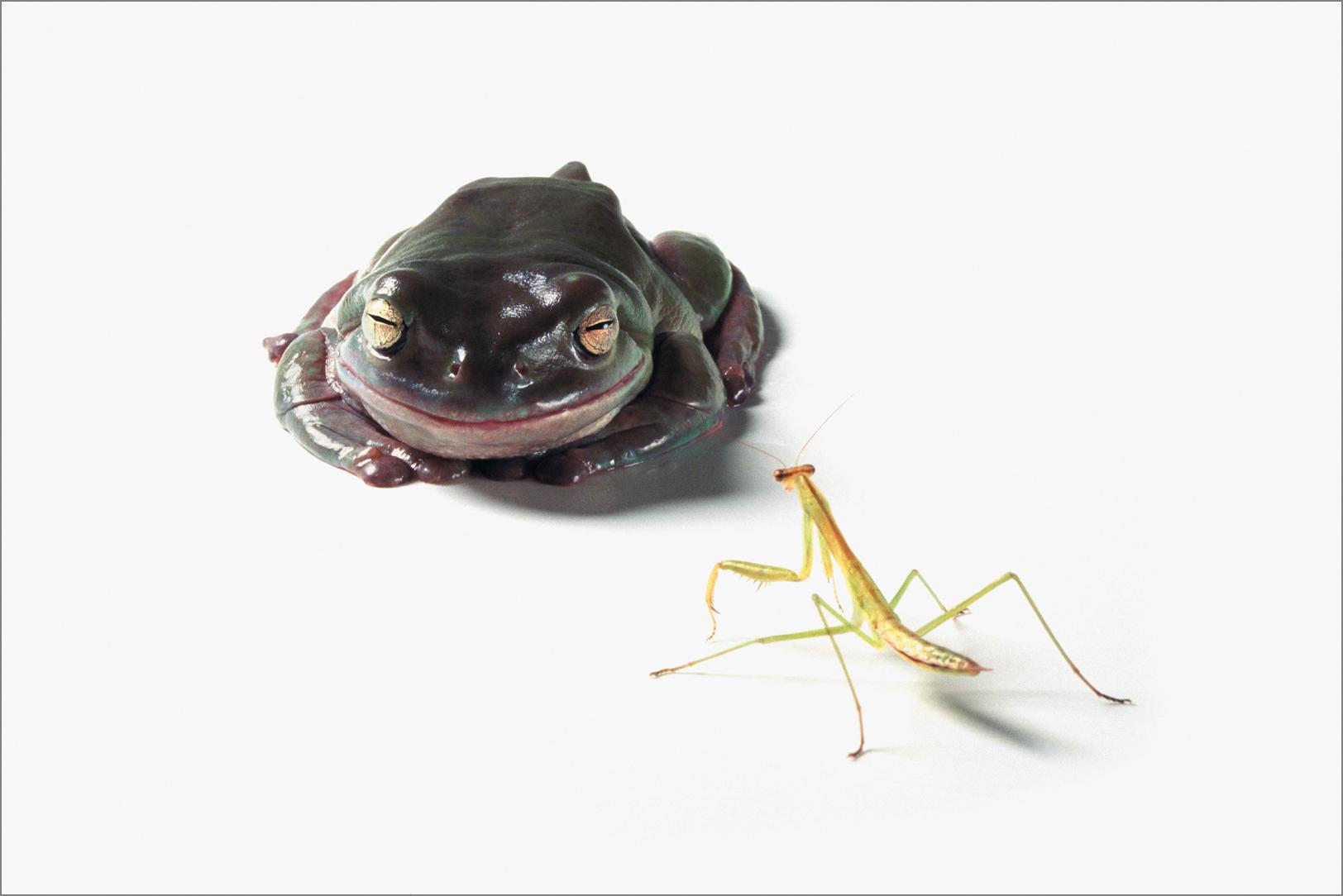 fc_frog1_4g.jpg